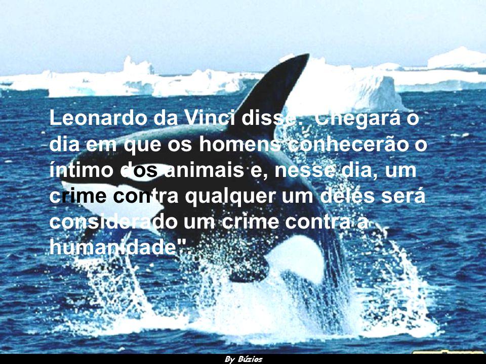 By Búzios Muitos gênios da humanidade foram verdadeiros amantes dos animais e defensores de seus direitos.