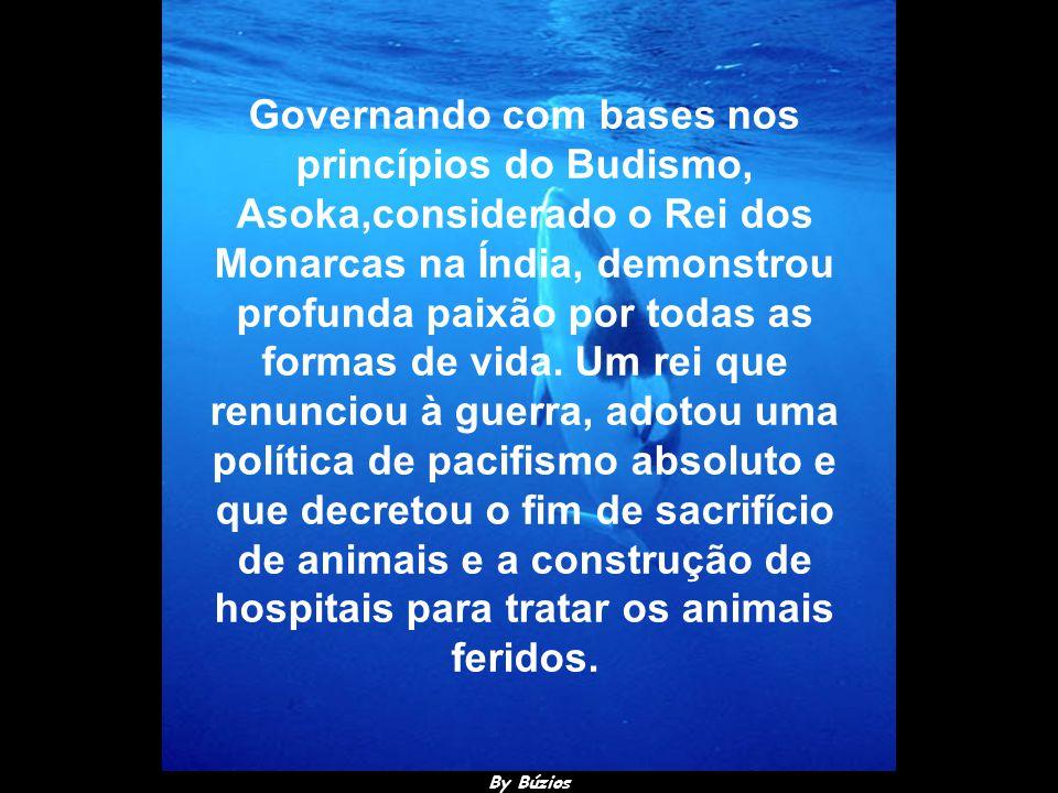By Búzios Outro seria o destino dos animais se os governantes refletissem sobre os dizeres de A.