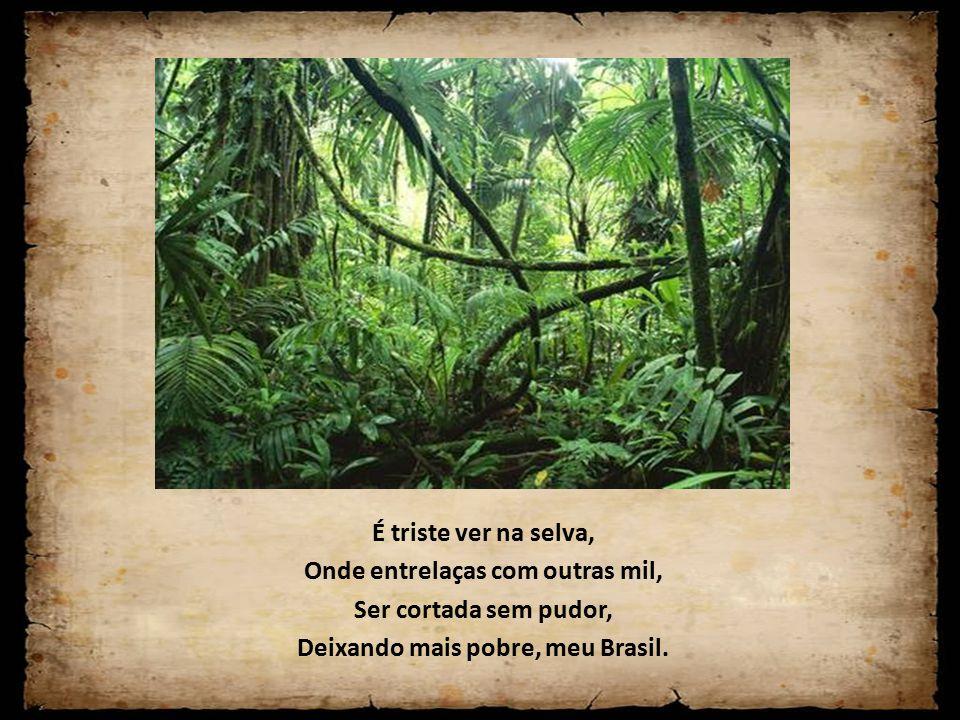 É triste ver na selva, Onde entrelaças com outras mil, Ser cortada sem pudor, Deixando mais pobre, meu Brasil.