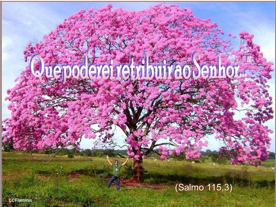 Marcos 4,27 (Salmo 115,3)