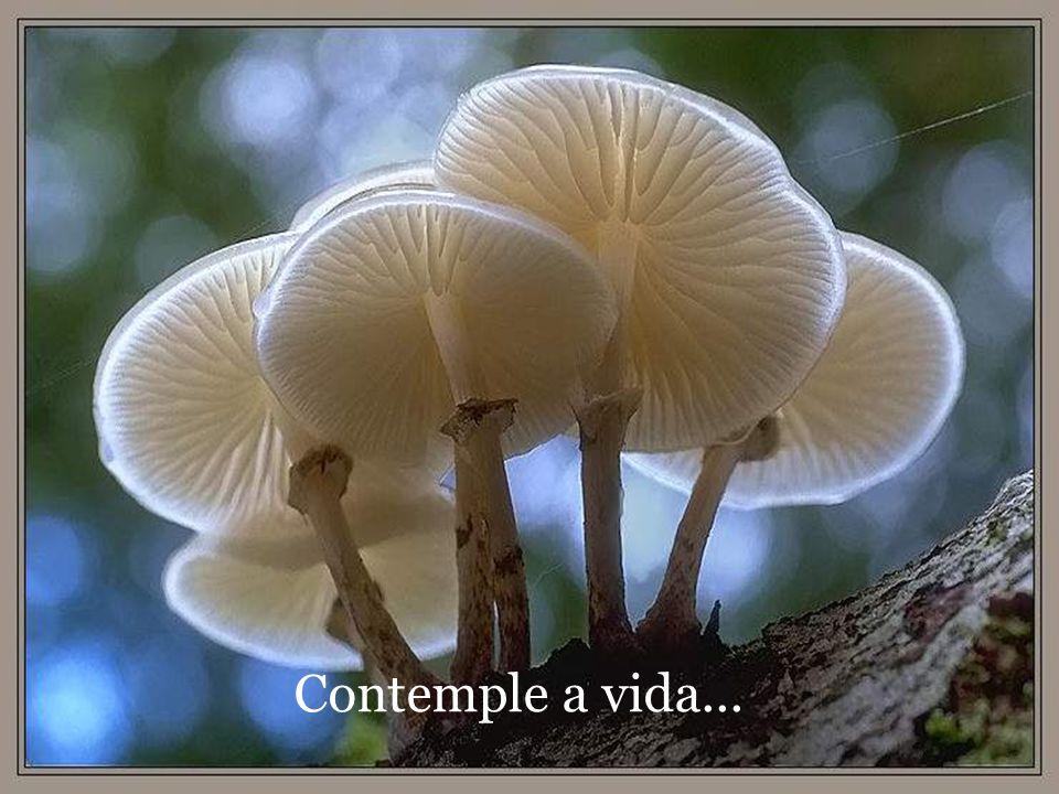 Contemple a beleza da vida...