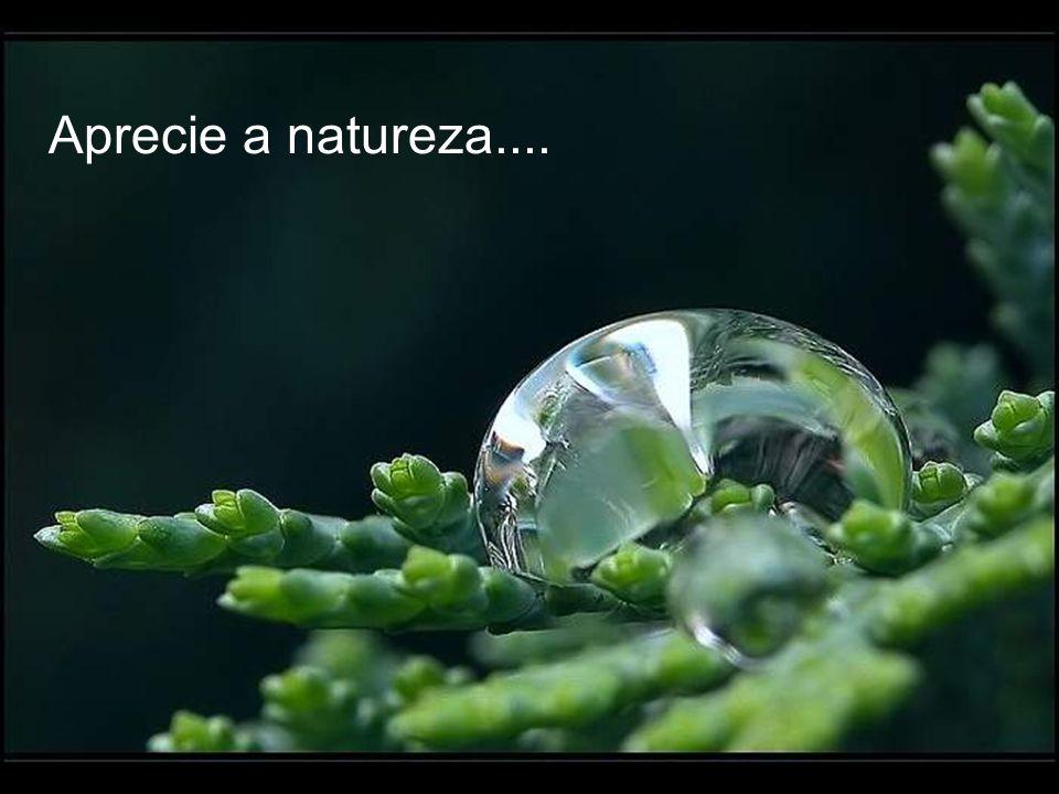 Contemple a vida...