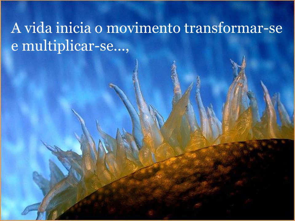 A vida inicia o movimento transformar-se e multiplicar-se...,