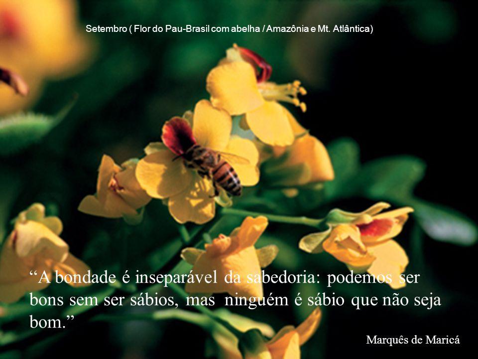 """""""A bondade é inseparável da sabedoria: podemos ser bons sem ser sábios, mas ninguém é sábio que não seja bom."""" Marquês de Maricá Setembro ( Flor do Pa"""