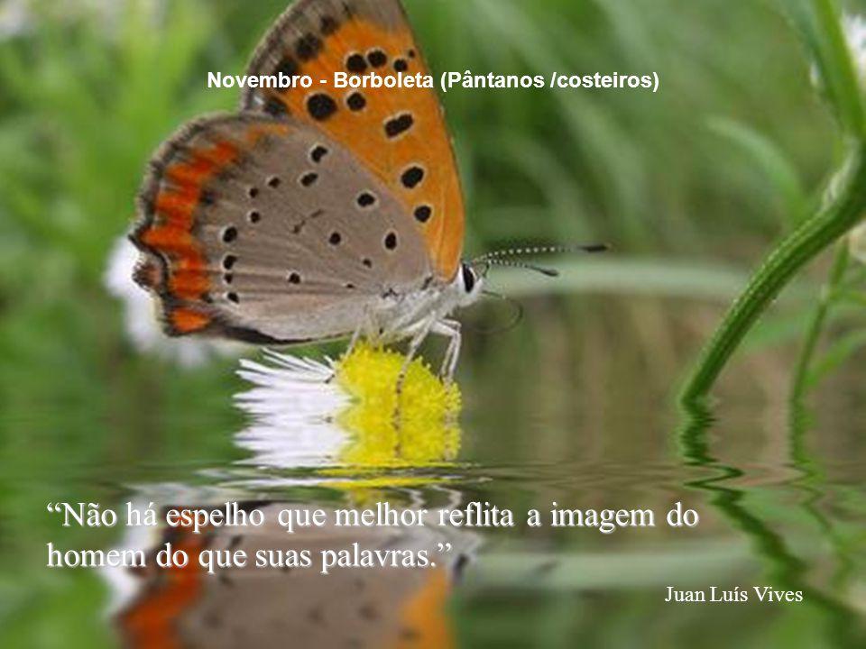 """""""Não há espelho que melhor reflita a imagem do homem do que suas palavras."""" Juan Luís Vives Novembro - Borboleta (Pântanos /costeiros)"""