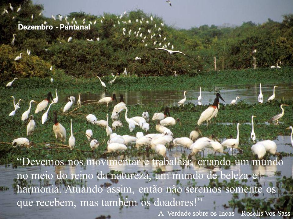 """""""Devemos nos movimentar e trabalhar, criando um mundo no meio do reino da natureza, um mundo de beleza e harmonia. Atuando assim, então não seremos so"""