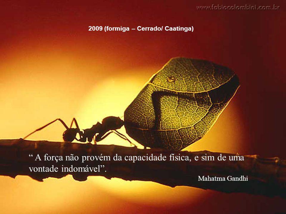 """""""A força não provém da capacidade física, e sim de uma vontade indomável."""" Mahatma Gandhi 2009 (formiga – Cerrado/ Caatinga) """" A força não provém da c"""
