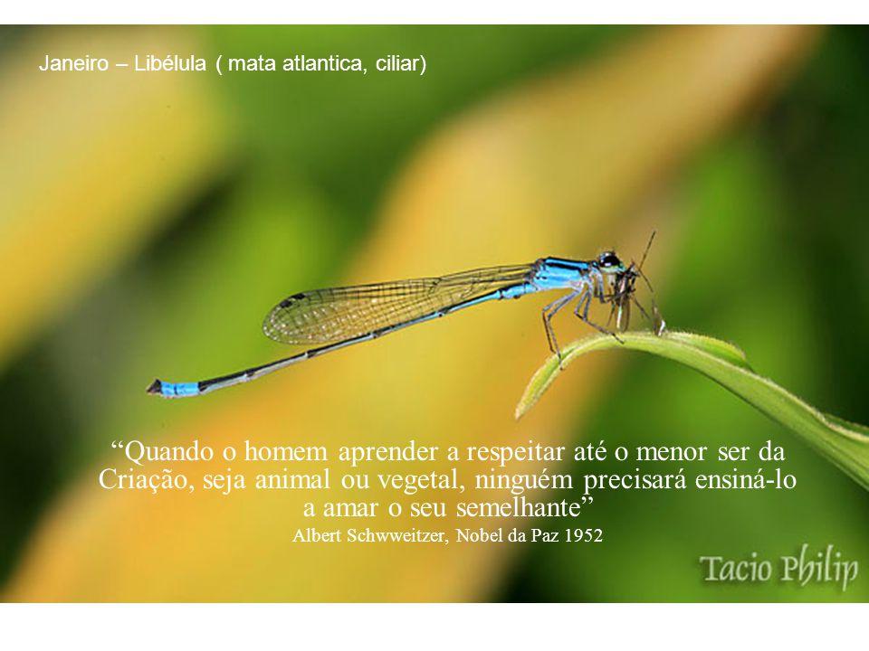 Devemos nos movimentar e trabalhar, criando um mundo no meio do reino da natureza, um mundo de beleza e harmonia.