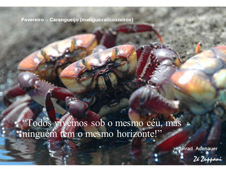 """""""Todos vivemos sob o mesmo céu, mas ninguém tem o mesmo horizonte!"""" Konrad Adenauer Fevereiro – Carangueijo (manguezal/costeiros)"""