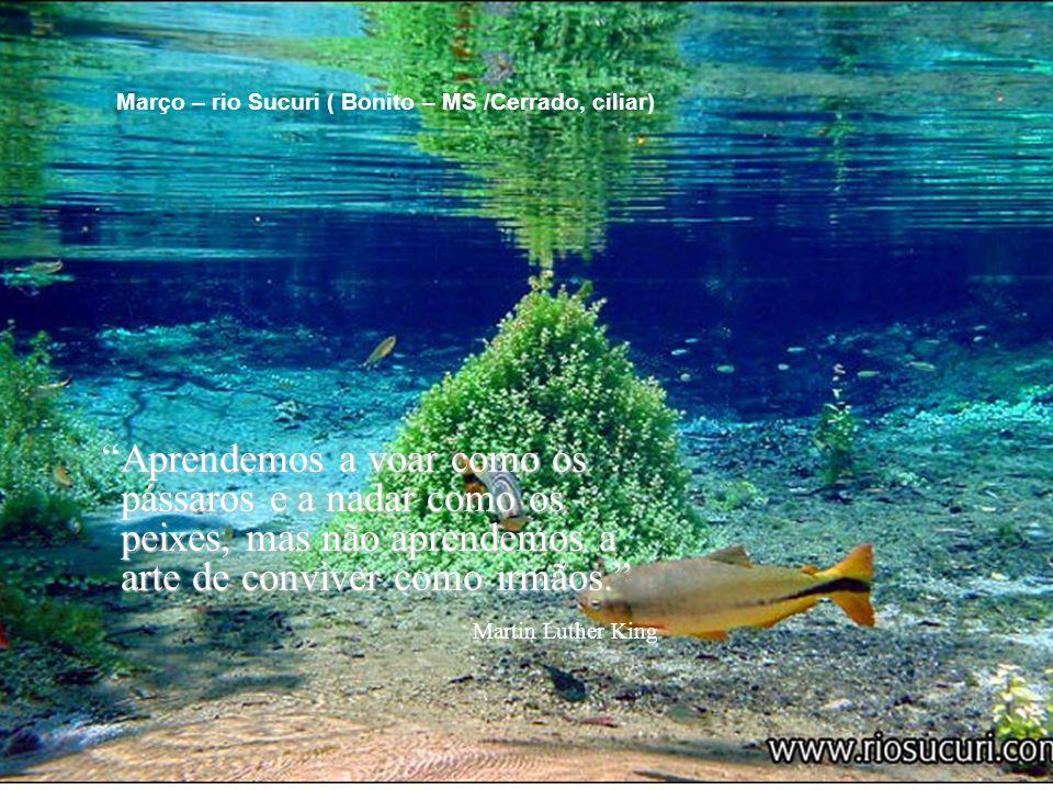 Devemos cuidar da natureza em que nos é permitido viver, conservando-a pura e ainda a embelezando.