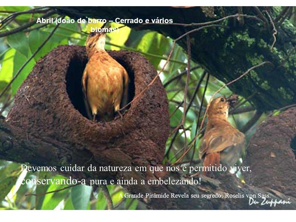 Devemos cuidar da natureza em que nos é permitido viver, conservando-a pura e ainda a embelezando! A Grande Pirâmide Revela seu segredo, Roselis von S