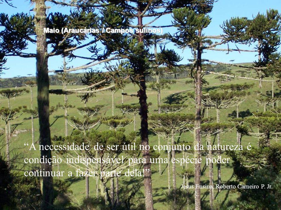 """""""A necessidade de ser útil no conjunto da natureza é condição indispensável para uma espécie poder continuar a fazer parte dela!"""" Jesus Ensina, Robert"""