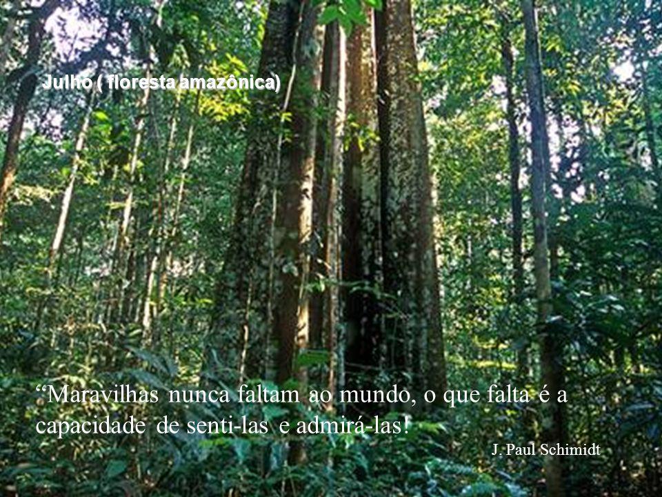 """""""Maravilhas nunca faltam ao mundo, o que falta é a capacidade de senti-las e admirá-las! J. Paul Schimidt Julho ( floresta amazônica)"""