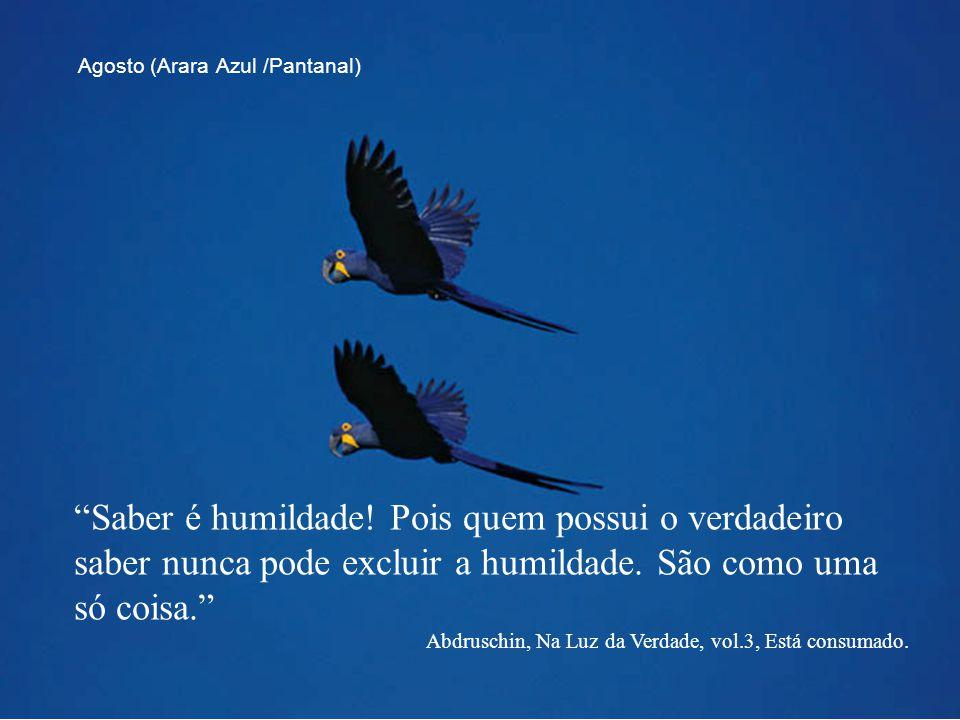 """""""Saber é humildade! Pois quem possui o verdadeiro saber nunca pode excluir a humildade. São como uma só coisa."""" Abdruschin, Na Luz da Verdade, vol.3,"""