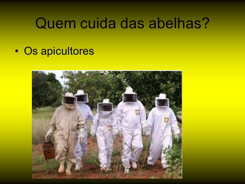Quem cuida das abelhas? Os apicultores