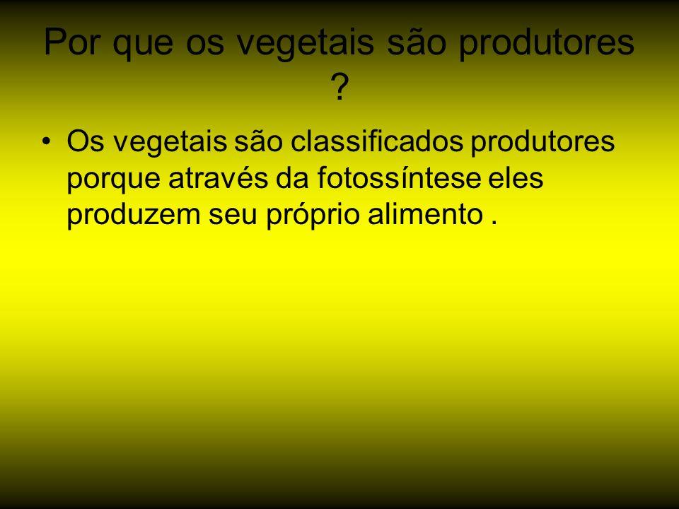 Por que os vegetais são produtores ? Os vegetais são classificados produtores porque através da fotossíntese eles produzem seu próprio alimento.