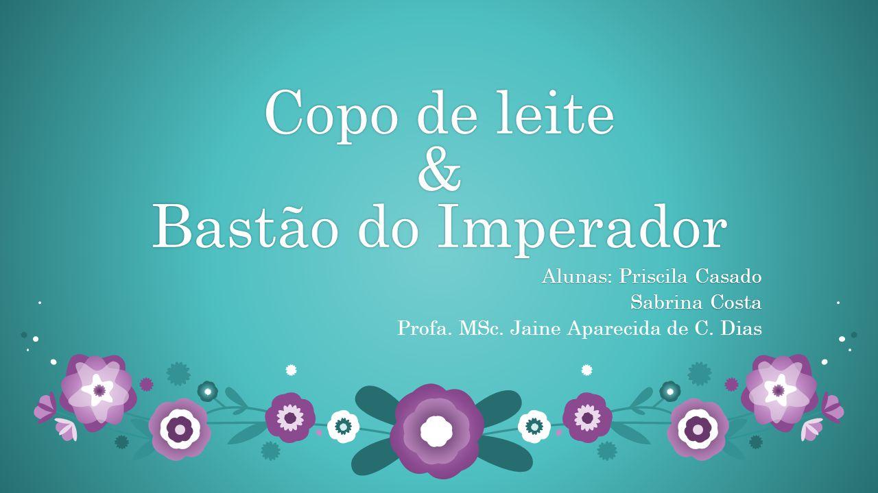 Copo de leite & Bastão do Imperador Alunas: Priscila CasadoAlunas: Priscila Casado Sabrina CostaSabrina Costa Profa.
