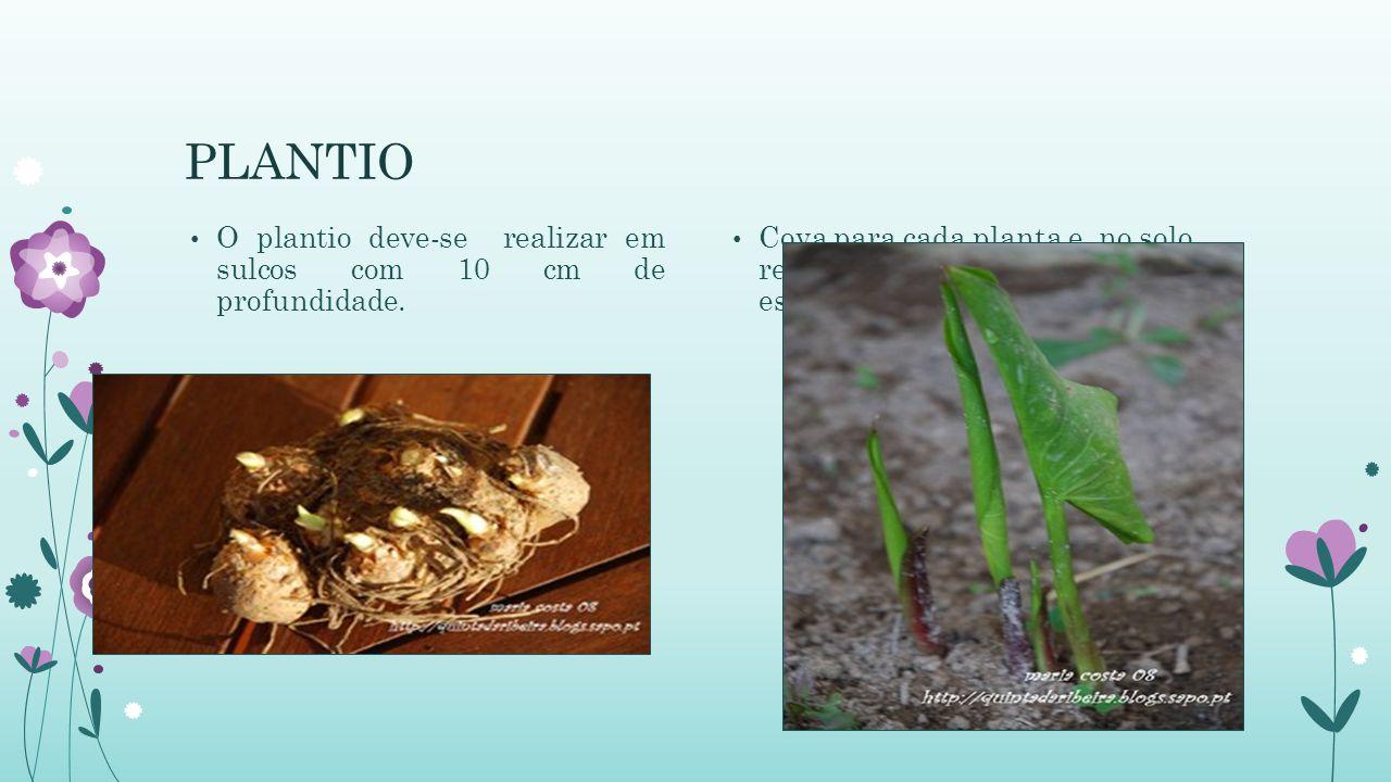 PLANTIO O plantio deve-se realizar em sulcos com 10 cm de profundidade. Cova para cada planta e, no solo retirado, devem-se misturar o esterco e o adu