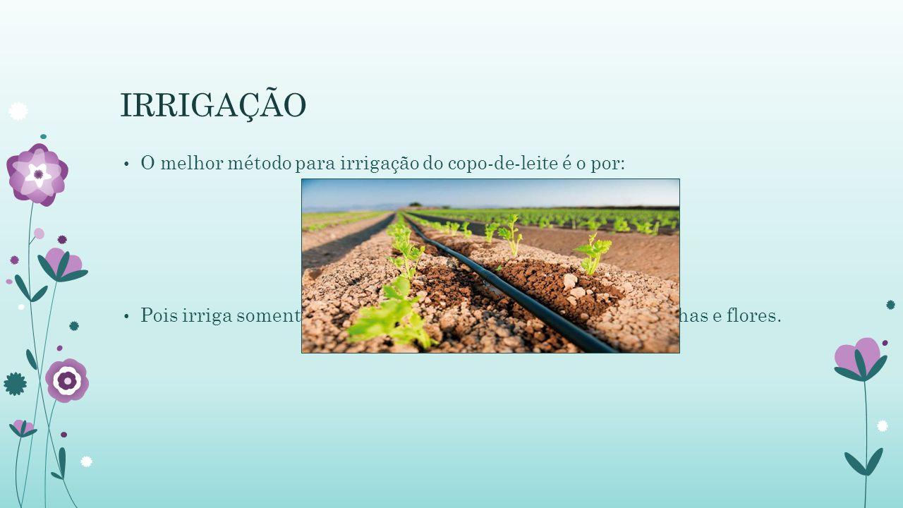 IRRIGAÇÃO O melhor método para irrigação do copo-de-leite é o por: Pois irriga somente o solo, evitando o acúmulo de água nas folhas e flores.