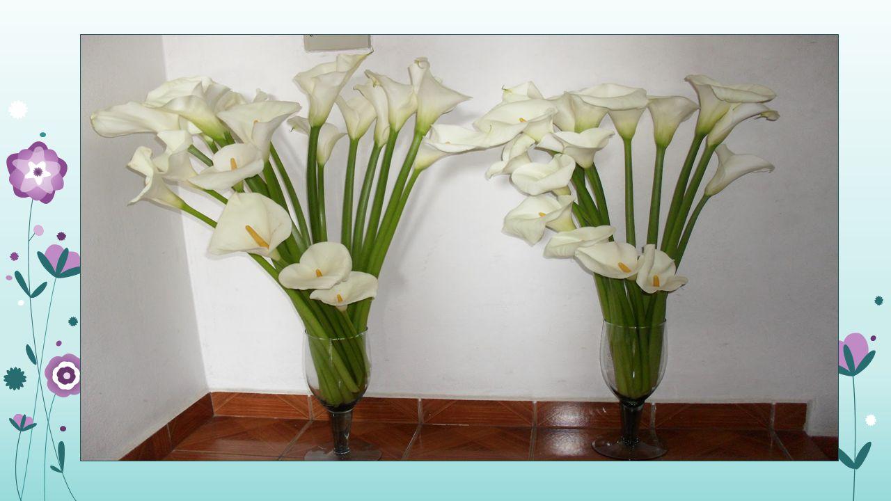 COLHEITA Deve-se evitar colher flores com presença de pólen, pois, após a polinização, a longevidade é menor.
