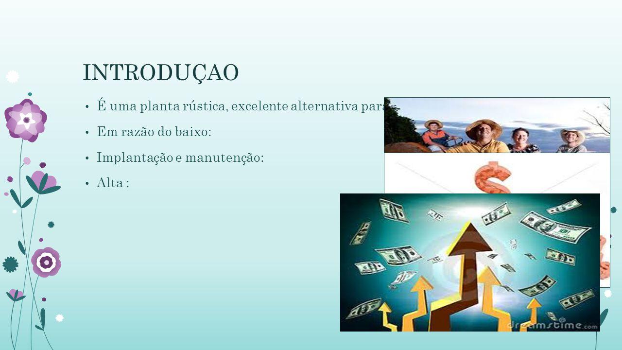 INTRODUÇAO É uma planta rústica, excelente alternativa para: Em razão do baixo: Implantação e manutenção: Alta :