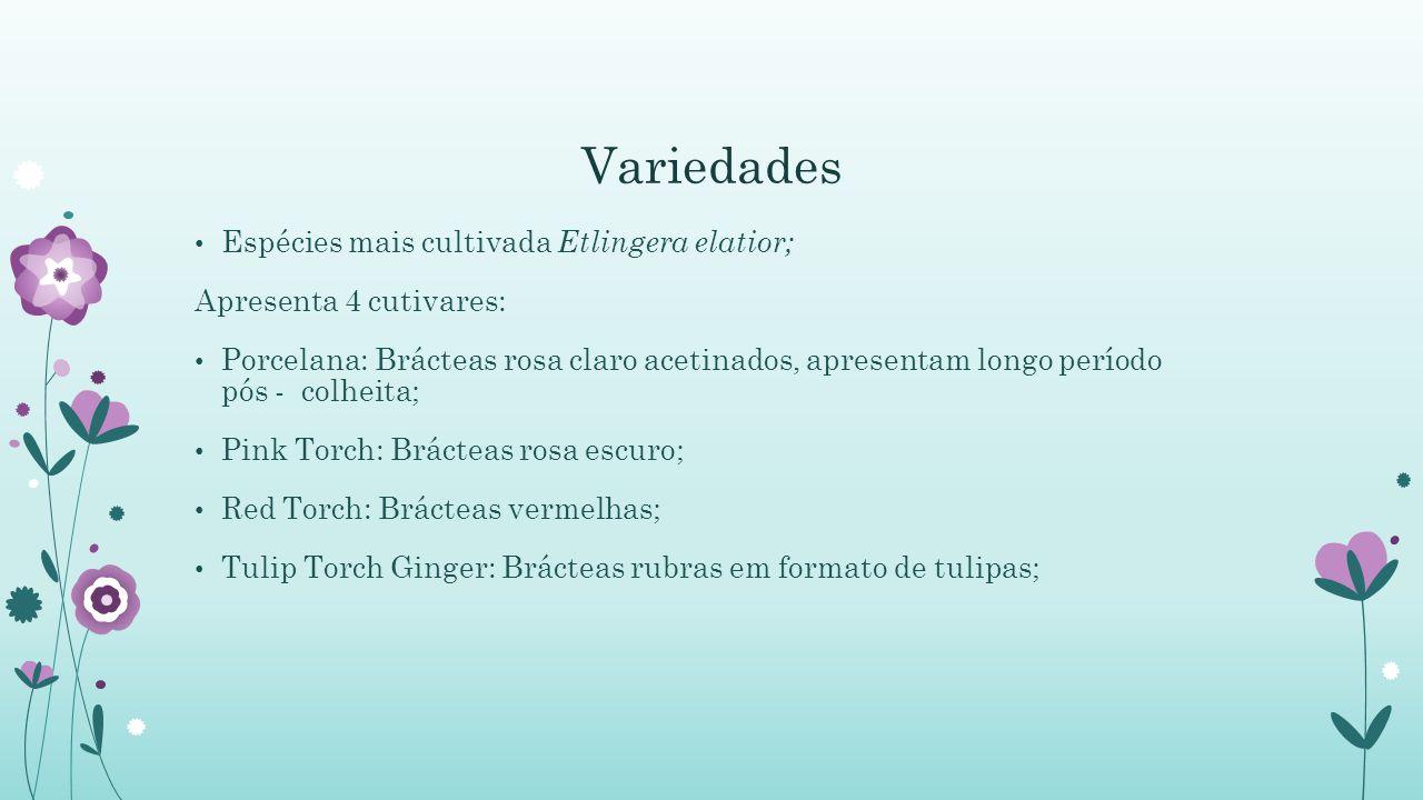Variedades Espécies mais cultivada Etlingera elatior; Apresenta 4 cutivares: Porcelana: Brácteas rosa claro acetinados, apresentam longo período pós -