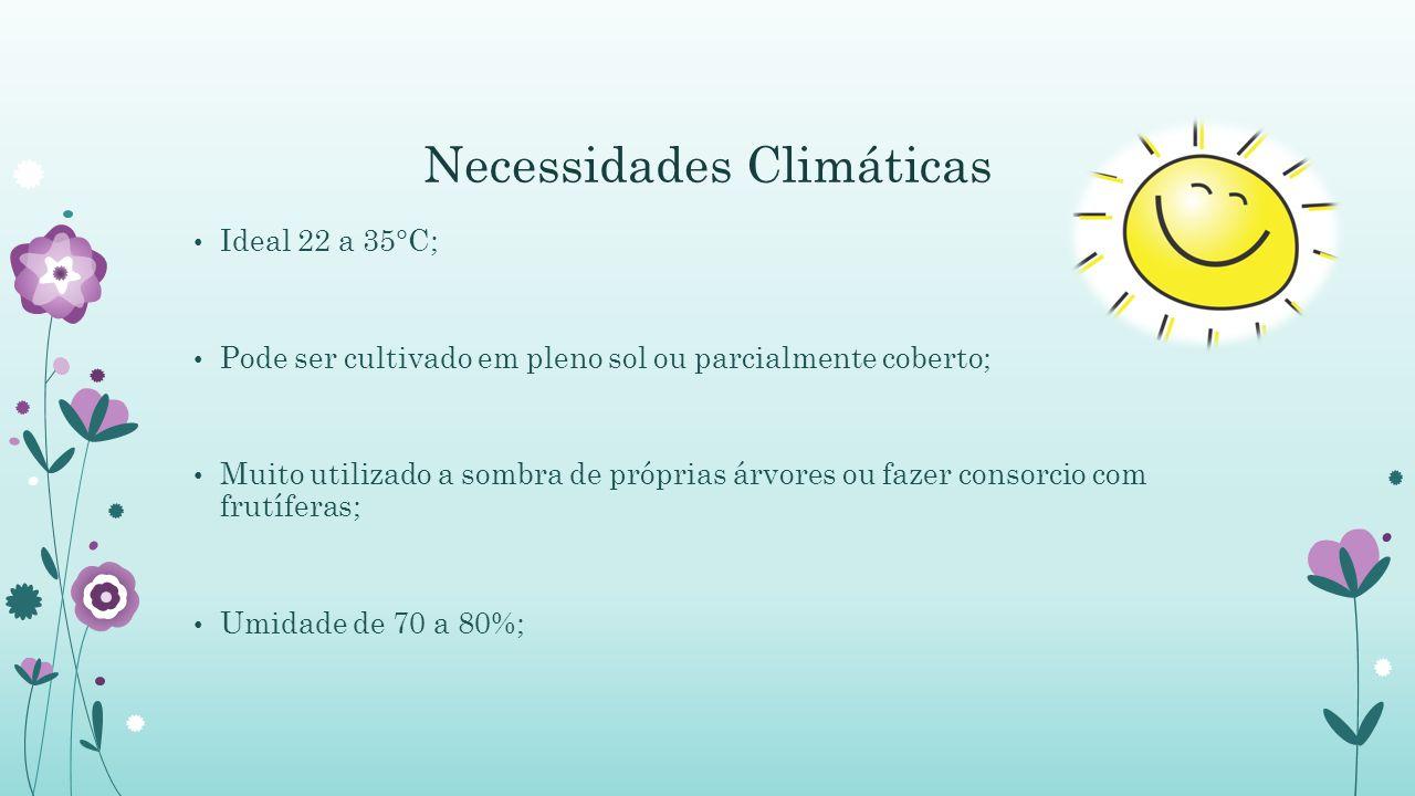 Necessidades Climáticas Ideal 22 a 35°C; Pode ser cultivado em pleno sol ou parcialmente coberto; Muito utilizado a sombra de próprias árvores ou fazer consorcio com frutíferas; Umidade de 70 a 80%;