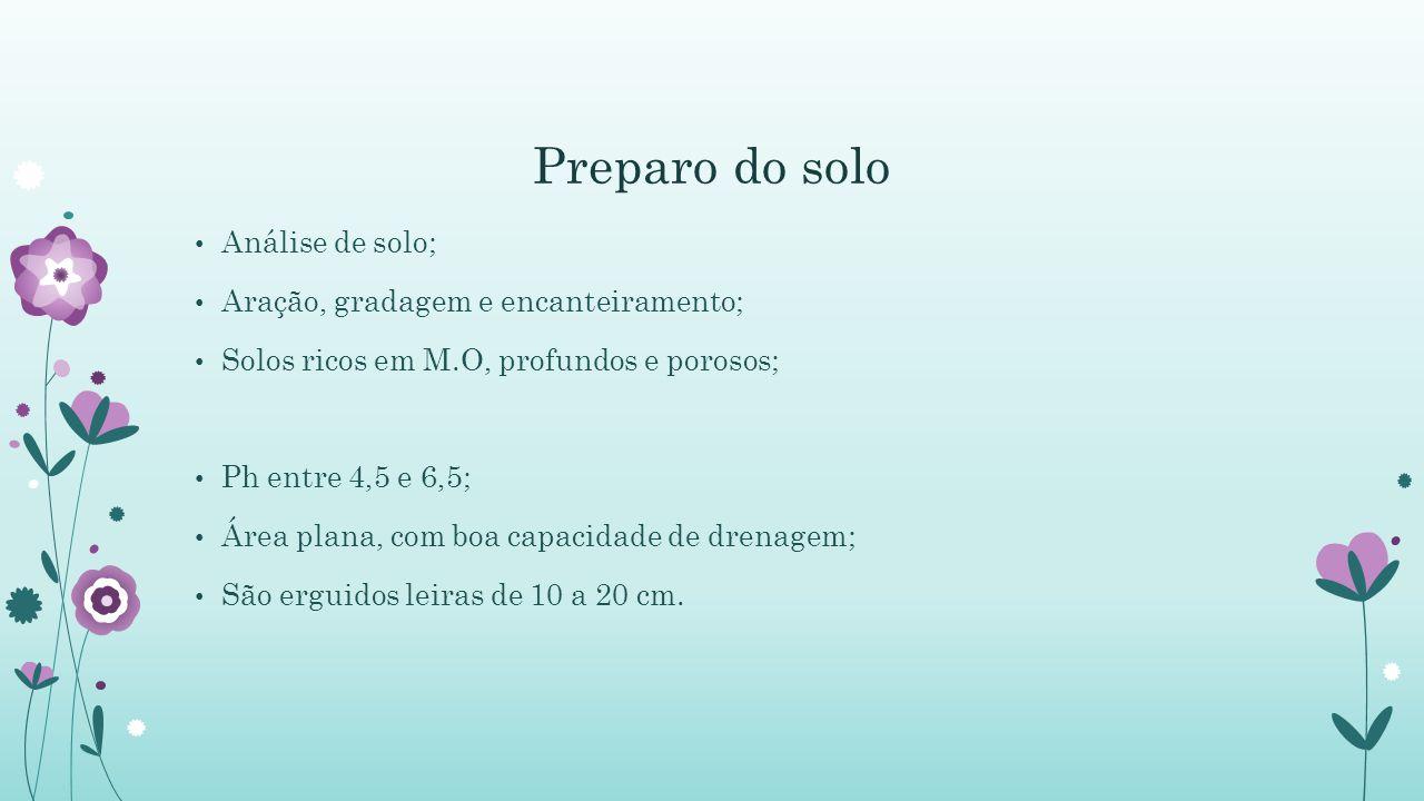 Preparo do solo Análise de solo; Aração, gradagem e encanteiramento; Solos ricos em M.O, profundos e porosos; Ph entre 4,5 e 6,5; Área plana, com boa