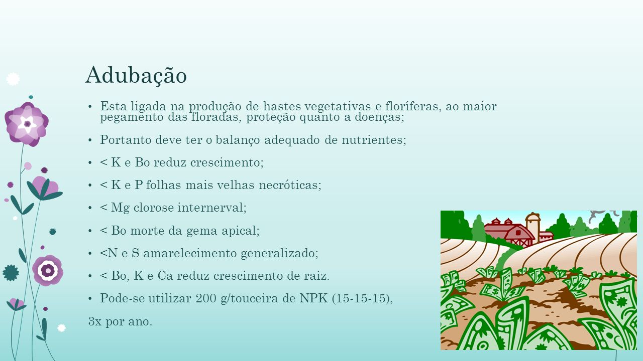 Adubação Esta ligada na produção de hastes vegetativas e floríferas, ao maior pegamento das floradas, proteção quanto a doenças; Portanto deve ter o balanço adequado de nutrientes; < K e Bo reduz crescimento; < K e P folhas mais velhas necróticas; < Mg clorose internerval; < Bo morte da gema apical; <N e S amarelecimento generalizado; < Bo, K e Ca reduz crescimento de raiz.