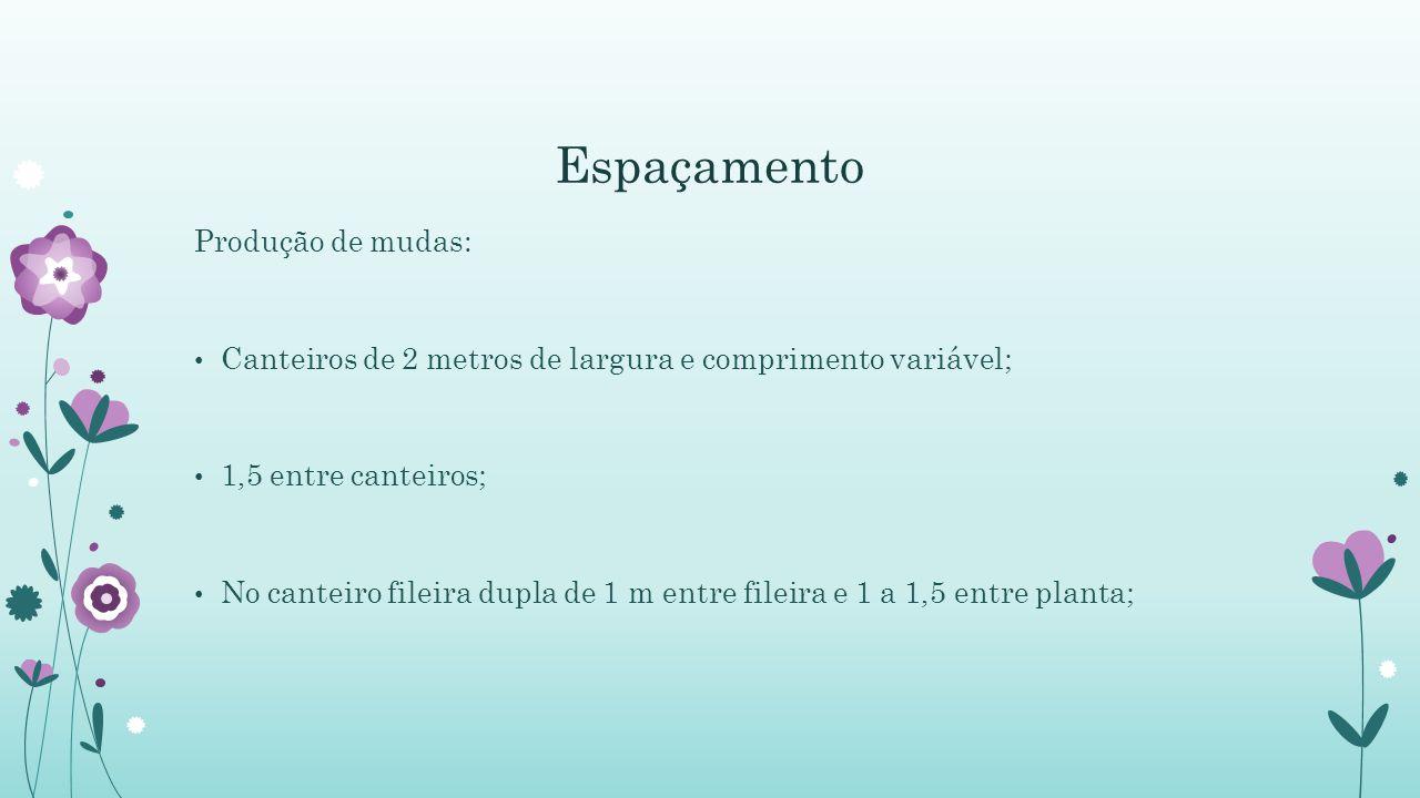 Espaçamento Produção de mudas: Canteiros de 2 metros de largura e comprimento variável; 1,5 entre canteiros; No canteiro fileira dupla de 1 m entre fileira e 1 a 1,5 entre planta;