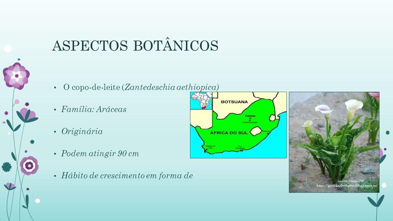 ASPECTOS BOTÂNICOS O copo-de-leite ( Zantedeschia aethiopica) Família: Aráceas Originária Podem atingir 90 cm Hábito de crescimento em forma de