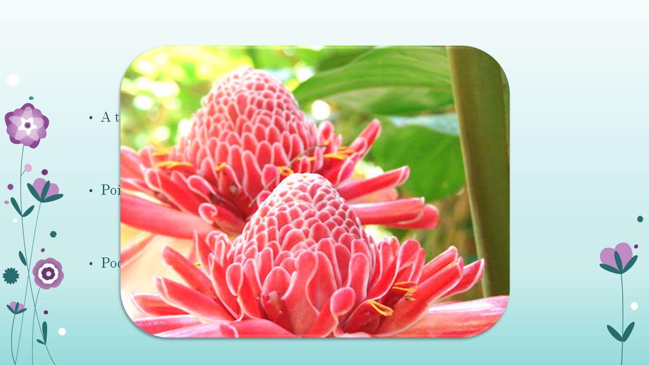 A temperatura não pode ser menor que 13° C para o transporte; Pois as inflorescências murcham e queimam as hastes florais; Pode durar até 15 dias se tiver bons cuidados pós colheita.