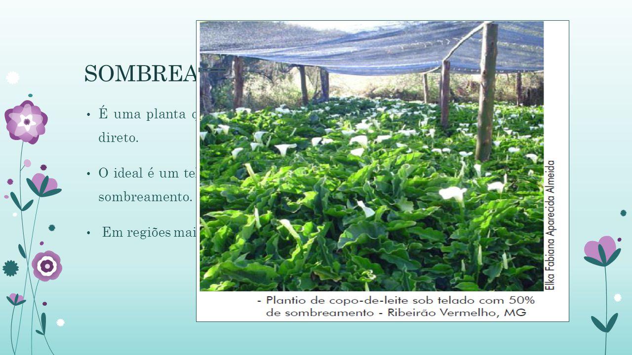 SOMBREAMENTO É uma planta que requer bastante luminosidade, mas é sensível ao sol direto.