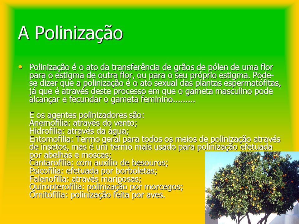 A Polinização Polinização é o ato da transferência de grãos de pólen de uma flor para o estigma de outra flor, ou para o seu próprio estigma. Pode- se