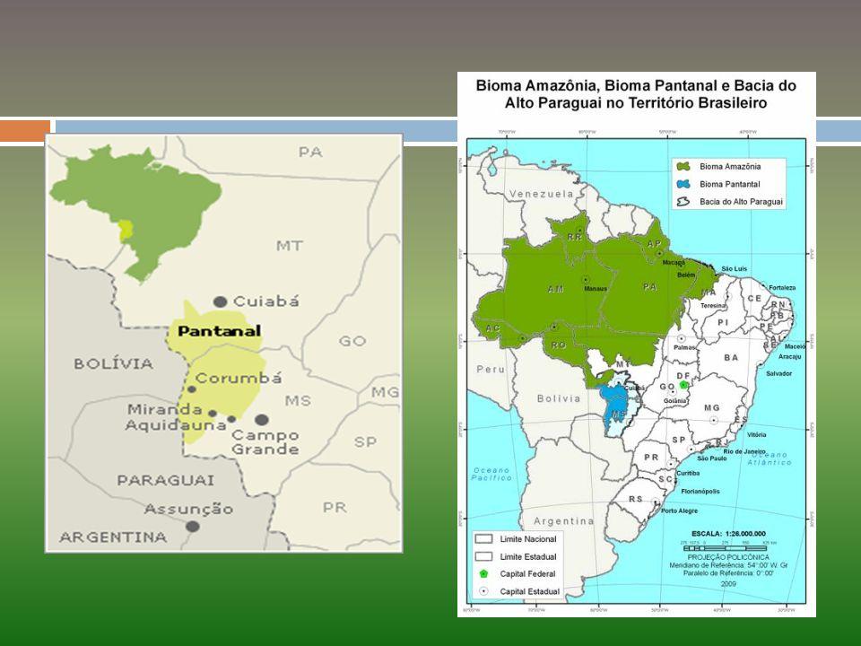 No Pantanal, o clima predominantemente tropical, apresenta características de continentalidade, com diferenças bem marcantes entre as estações seca e chuvosa.