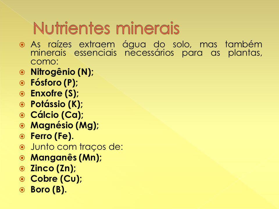  As raízes extraem água do solo, mas também minerais essenciais necessários para as plantas, como:  Nitrogênio (N);  Fósforo (P);  Enxofre (S);  Potássio (K);  Cálcio (Ca);  Magnésio (Mg);  Ferro (Fe).