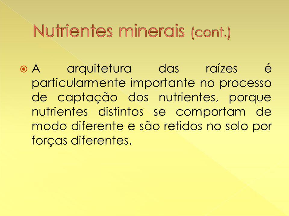  A arquitetura das raízes é particularmente importante no processo de captação dos nutrientes, porque nutrientes distintos se comportam de modo diferente e são retidos no solo por forças diferentes.