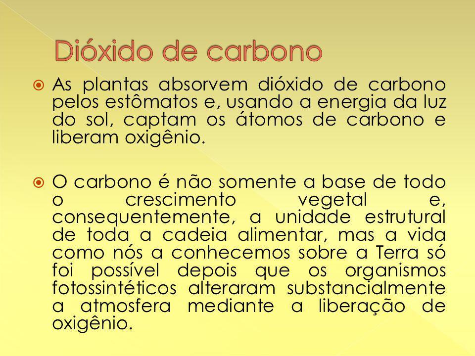  As plantas absorvem dióxido de carbono pelos estômatos e, usando a energia da luz do sol, captam os átomos de carbono e liberam oxigênio.