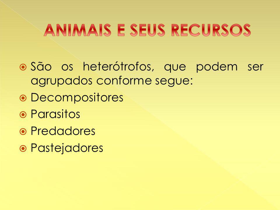  São os heterótrofos, que podem ser agrupados conforme segue:  Decompositores  Parasitos  Predadores  Pastejadores