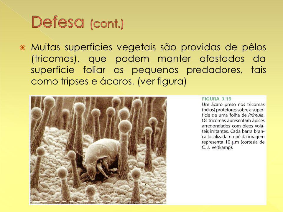  Muitas superfícies vegetais são providas de pêlos (tricomas), que podem manter afastados da superfície foliar os pequenos predadores, tais como tripses e ácaros.