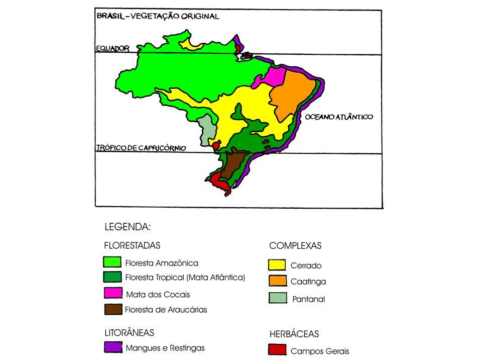 VEGETAÇÃO LITORÂNEA Ocorre ao longo de todo o litoral brasileiro desde o Amapá até o Rio Grande do Sul.
