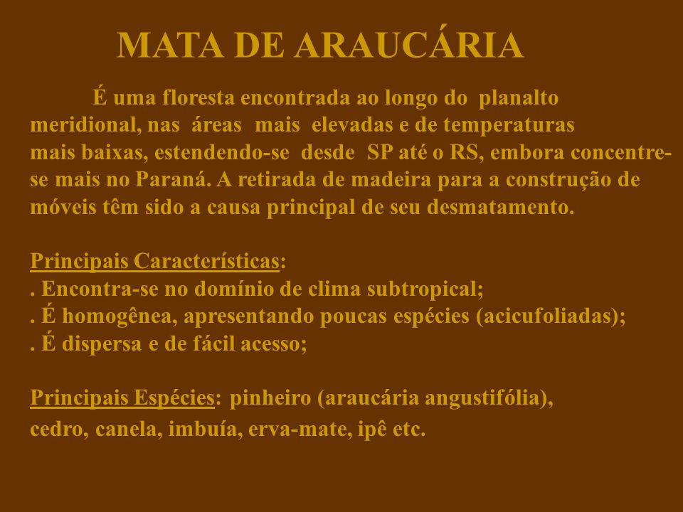 MATA DE ARAUCÁRIA É uma floresta encontrada ao longo do planalto meridional, nas áreas mais elevadas e de temperaturas mais baixas, estendendo-se desde SP até o RS, embora concentre- se mais no Paraná.