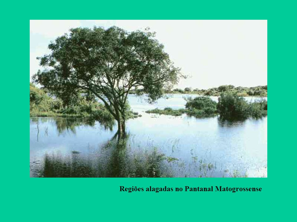 Regiões alagadas no Pantanal Matogrossense
