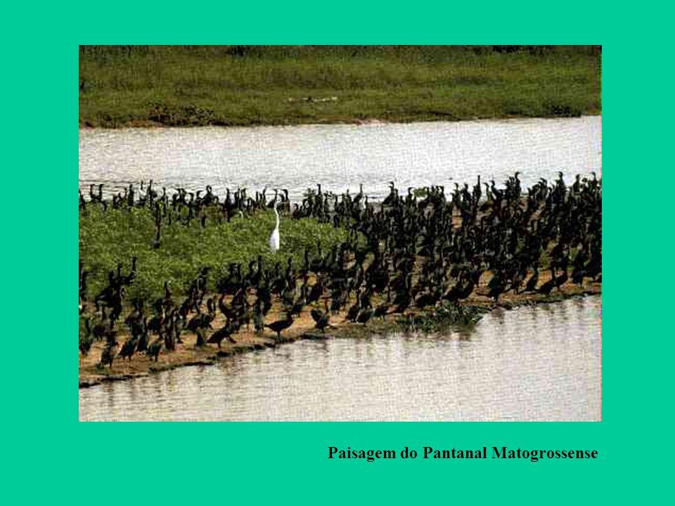 Paisagem do Pantanal Matogrossense