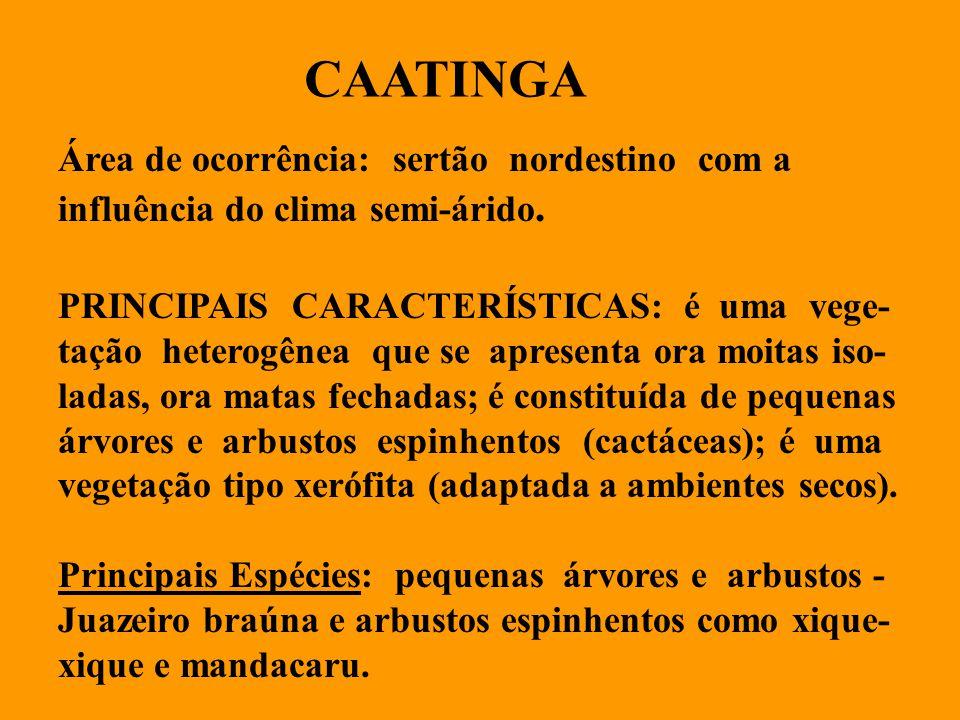 CAATINGA Área de ocorrência: sertão nordestino com a influência do clima semi-árido.