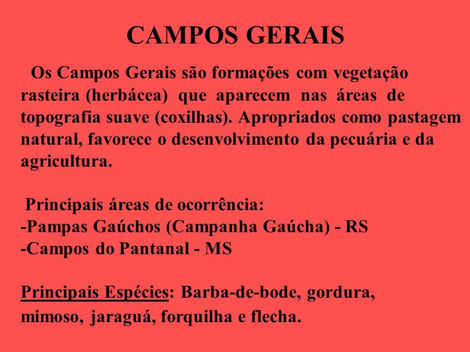 CAMPOS GERAIS Os Campos Gerais são formações com vegetação rasteira (herbácea) que aparecem nas áreas de topografia suave (coxilhas).