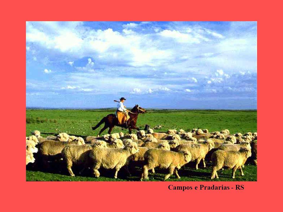 Campos e Pradarias - RS