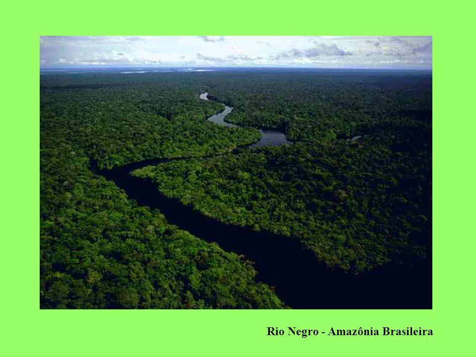 Paisagem Vegetal na Amazônia