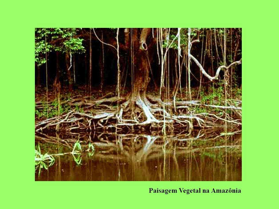 Ameaças ao Pantanal Crescimento desordenado de cidades e ocupação populacional; Atividade agrícola: maior erosão do solo contribuindo para o assoreamento dos rios e elevada utilização de agrotóxicos; Turismo desorganizado; Caça e apreensão de animais (atividade ilegal).