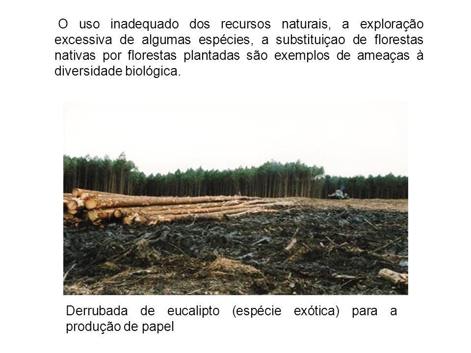 O uso inadequado dos recursos naturais, a exploração excessiva de algumas espécies, a substituiçao de florestas nativas por florestas plantadas são ex